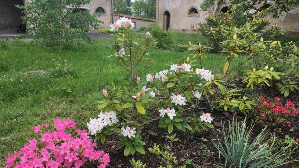 Des fleurs partout