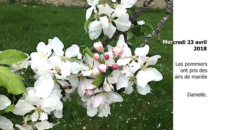 Des pommiers en fleurs