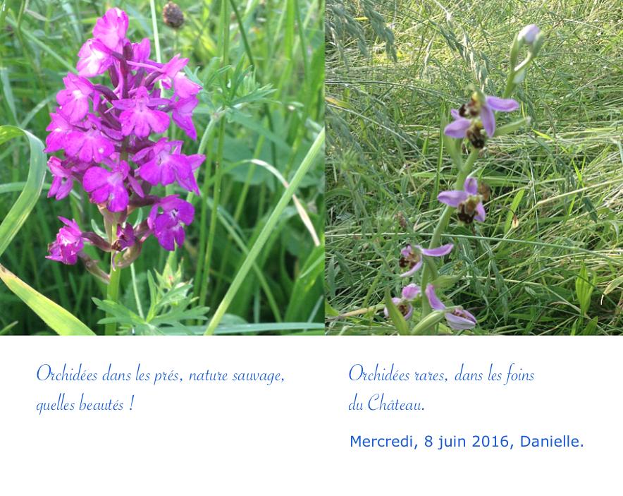 Orchidées rares !
