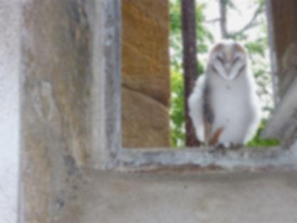 Un des oiseaux qui trouve un refuge au Domaine du Chêne (Nièvre, France).