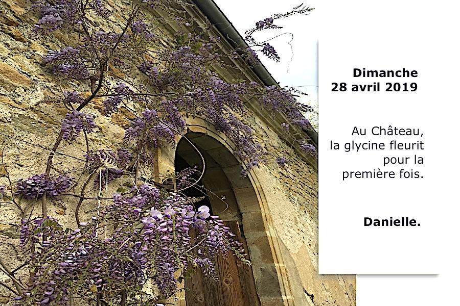 Glycine en fleurs au Château