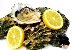 oysters-1.jpg