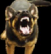 Thomas E. Sparks Law Dog Bite Lawyer RI