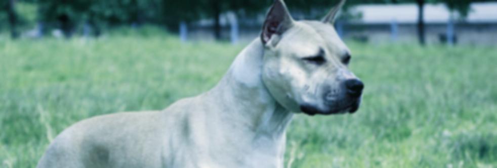 Sparks Law Dog Bite Injury Lawyer RI