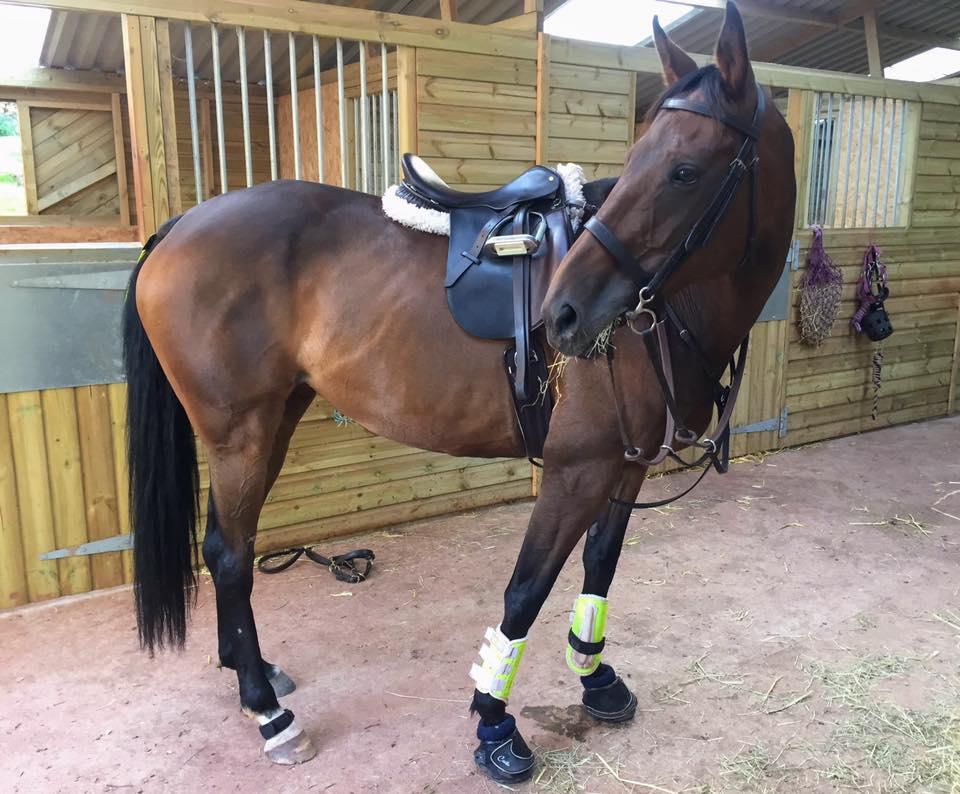 horse in american barn