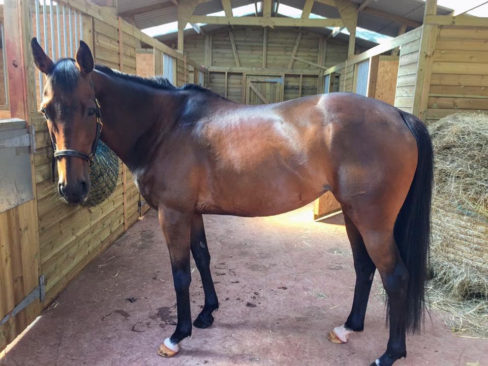 Devonshire stables horse