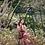 Thumbnail: Red Paisley Maxi Dress