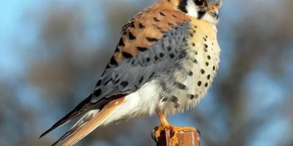 November Bird Walk. No Registration Needed