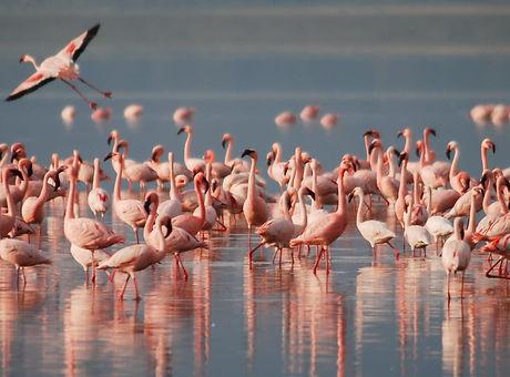 Flamingoing.jpg