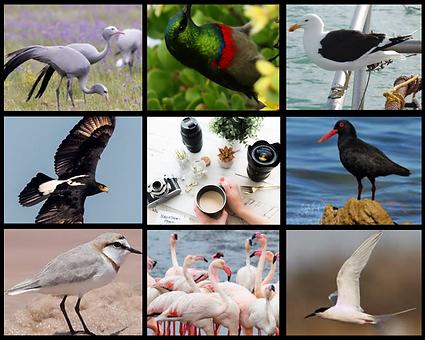 Birding tours website design.png