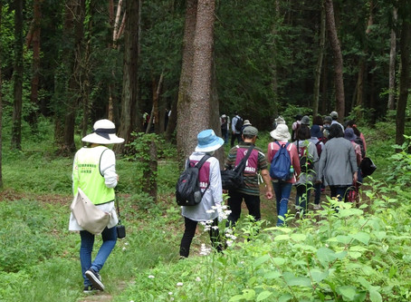 第20回ウォーキング大会 北杜市 尾白の森「べるが」で開催