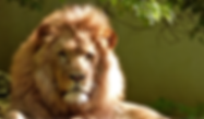 TN-Lion