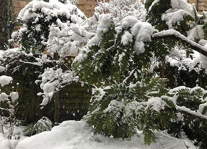 winterscene4.jpg