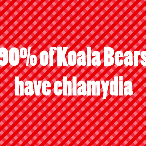 The Truth about Koala's