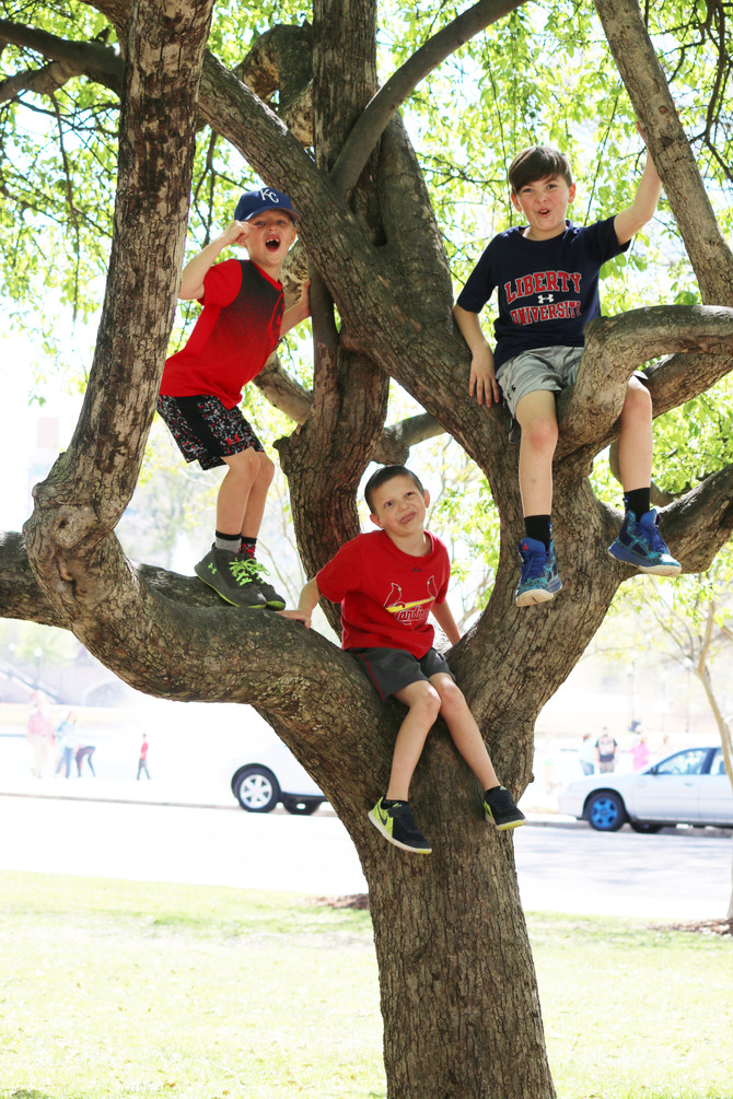 Boys and Trees