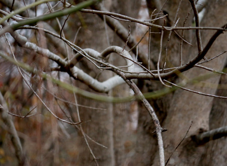More Than Twisted Branches