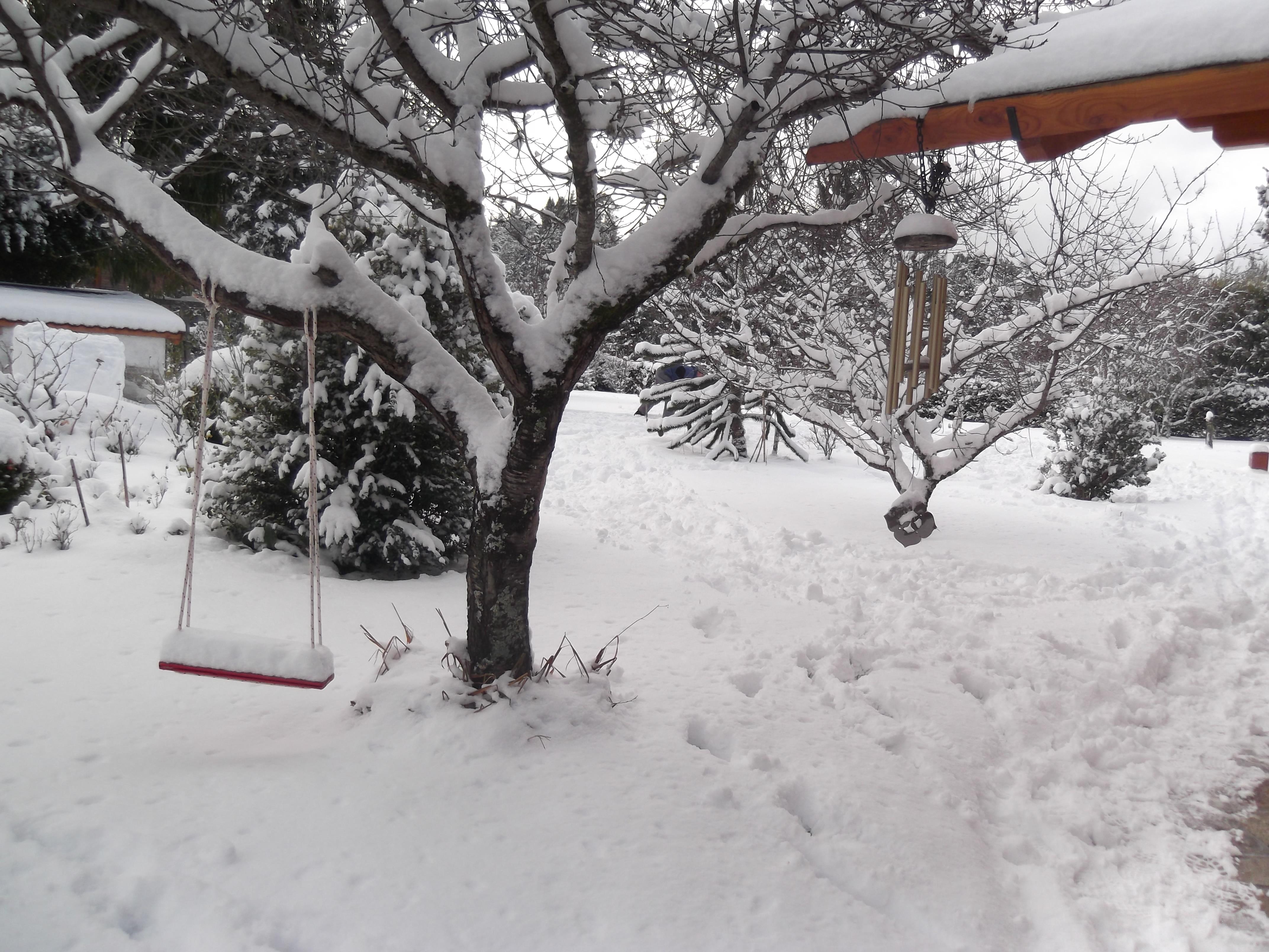Nieve