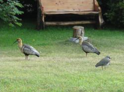 Aves en la Hostería