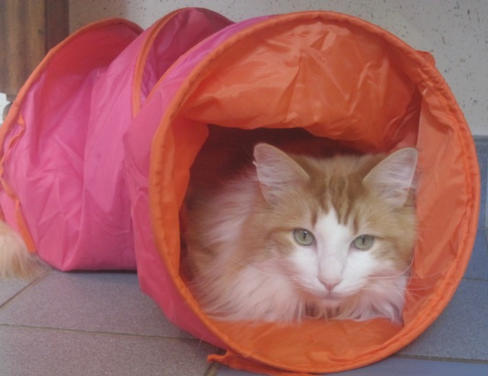 Harvey in a tube.png
