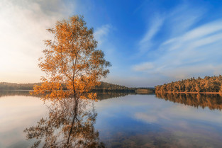 Fall Comes Slowly by Subham Shome.jpg