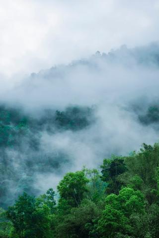 Misty Trees, Rishikhola