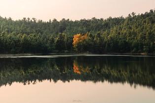 Talberiya Dam Trees