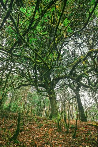 Tangled Tree, Tonglu Trek