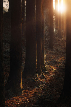 The Last Rays in the Woods