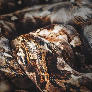 Python Skin 2