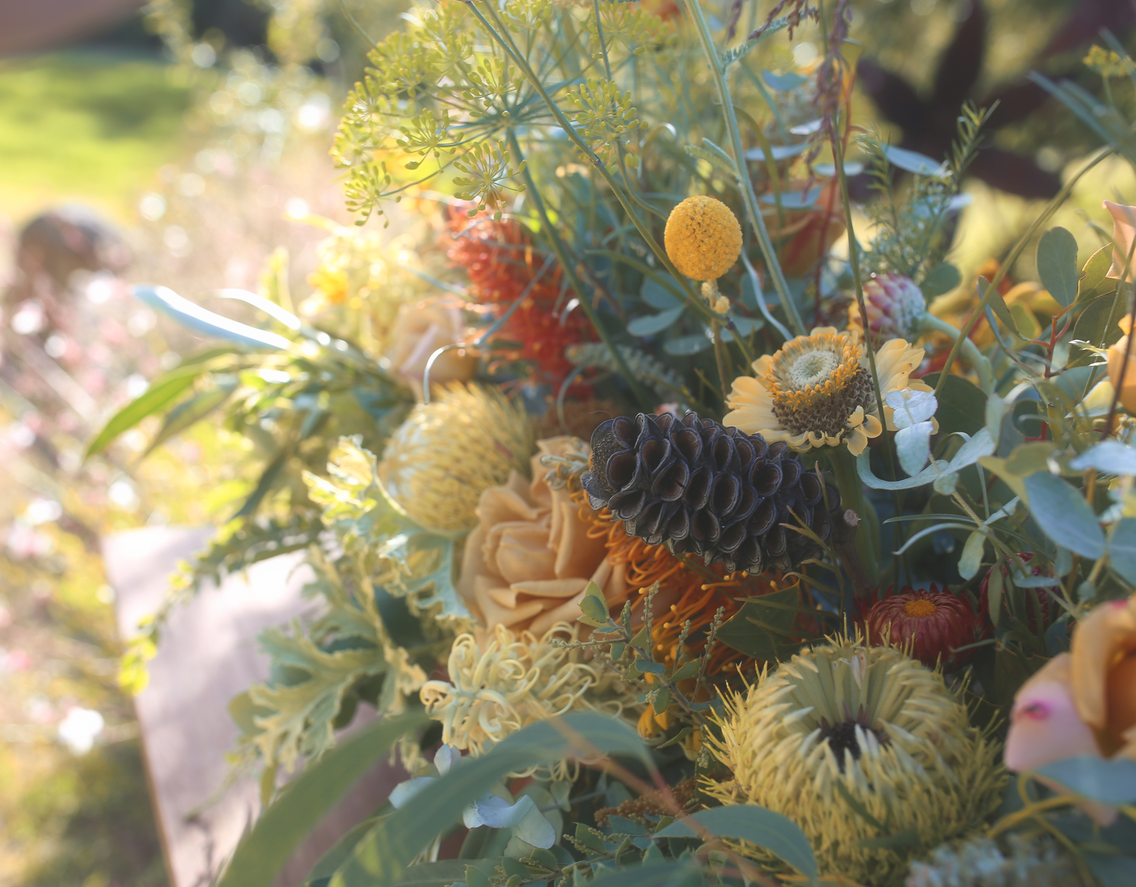 australianwildflowers