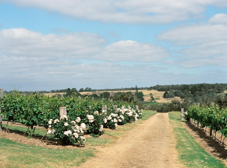 Riverdale Farm vineyard