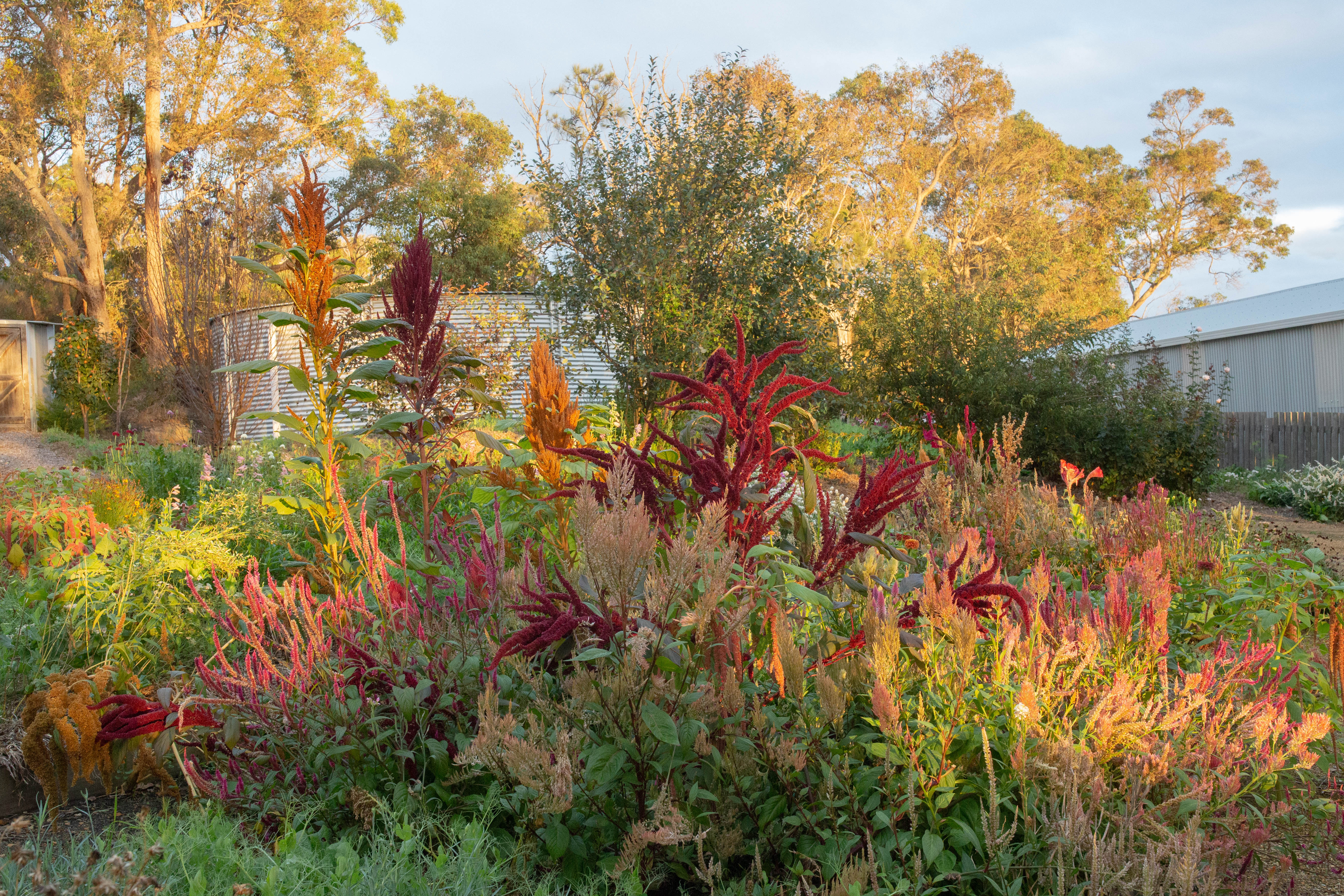 Autumn in the cutting garden