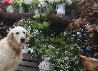 Seasonal Floral Design Class – Spring at Riverdale Farm