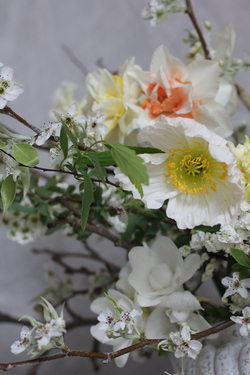 Iceland poppies and spring blossom