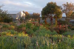 Cutting garden at Riverdale Farm
