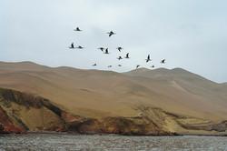 Peru - Paracas