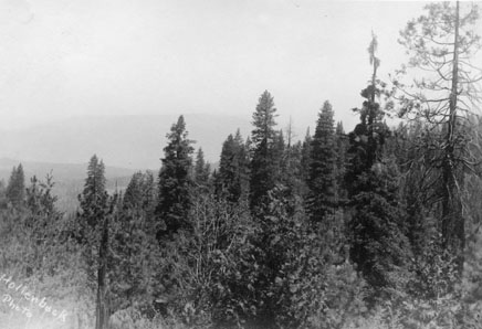 M086 Trees near Shaver Lake, circa 1920.