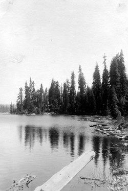 M088 Shore of Shaver Lake with logging d