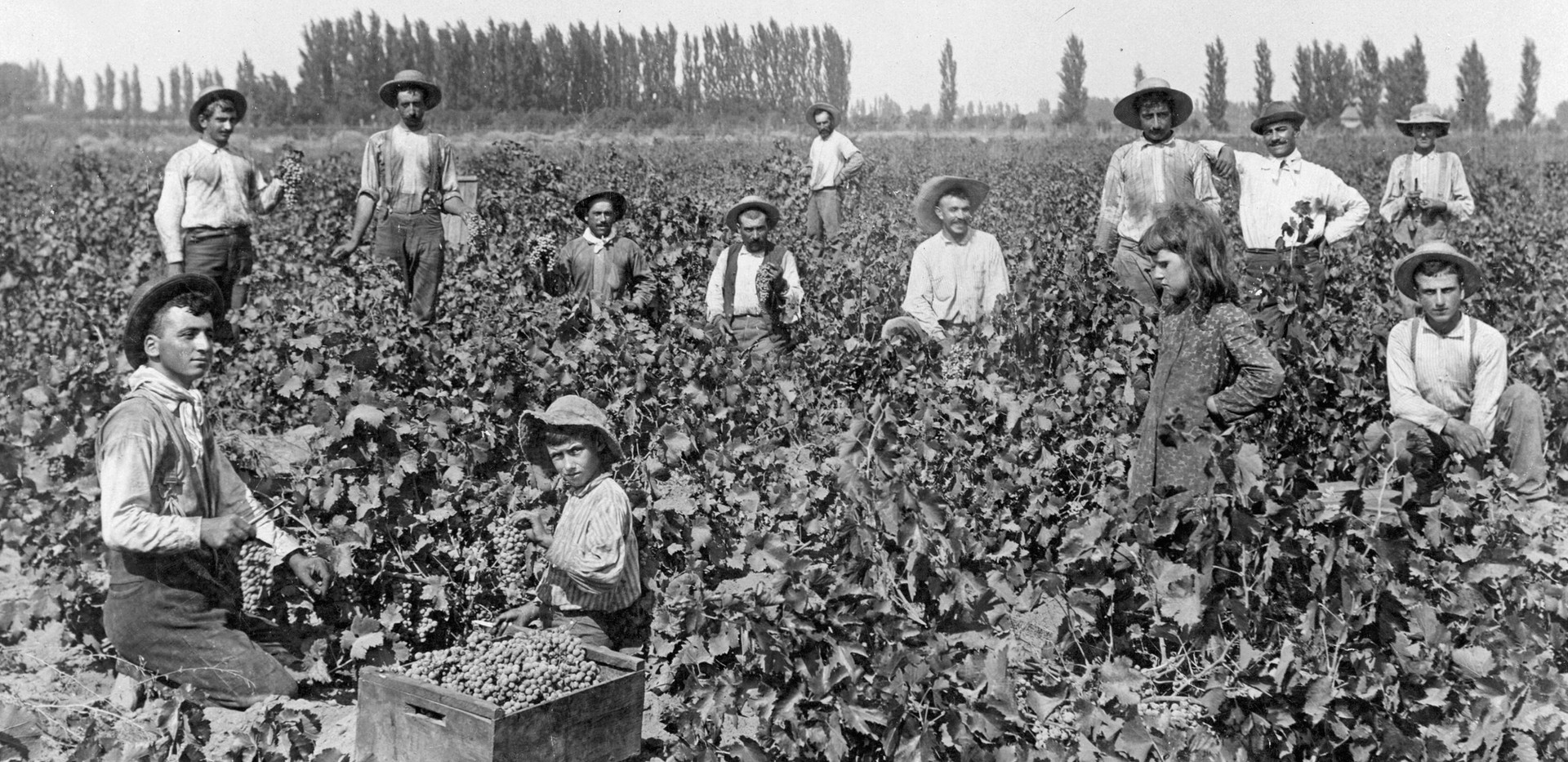 Armenians picking grapes at Kearney Vineyard.