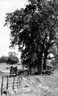 M095 Toll Gate Oak, Tollhouse, circa 192