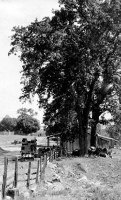 M095 Toll Gate Oak, Tollhouse, circa 192
