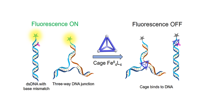 157. FeII4L4 Tetrahedron Binds to Nonpaired DNA Bases