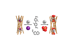 175. Selective Anion Binding Drives the Formation of AgI8L6 and AgI12L6 Six-Stranded Helicates