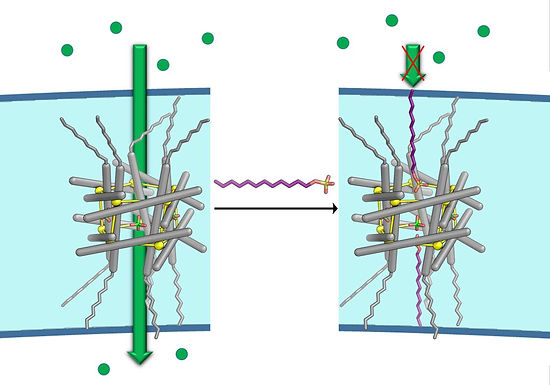 130. Blockable Zn10L15 ion channels via subcomponent self-assembly