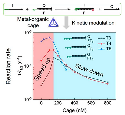 173. Kinetics of toehold-mediated DNA strand displacement depends on FeII4L4 tetrahedron concentration