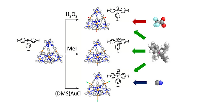 149. Post-assembly Modification of Phosphine Cages Controls Host–Guest Behavior