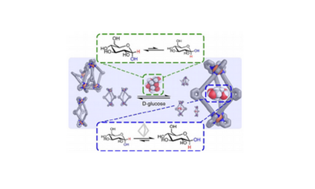 174.  Glucose Binding Drives Reconfiguration of a Dynamic Library of Urea-Containing Metal-Organic Assemblies