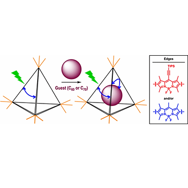 128. Excitation Energy Delocalization and Transfer to Guests within MII4L6 Cage Frameworks