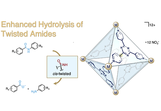 169. Hydrolysis of Twisted Amides inside a Self-Assembled Coordination Cage