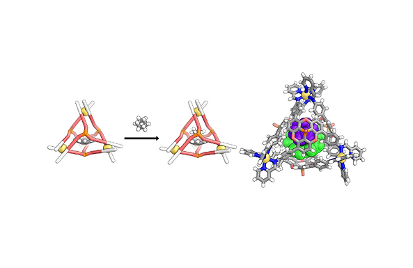 181. A curved host and second guest cooperatively inhibit the dynamic motion of corannulene